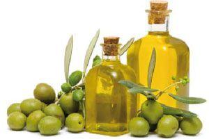 Ilustración de Cómo reconocer la variedad de aceites de oliva