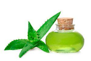 Cómo aprovechar las propiedades del aloe vera en fines medicinales y estéticos