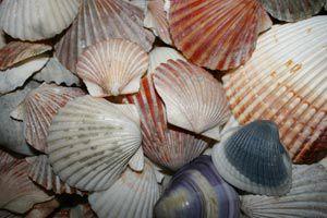 Decorar con caracolas y conchas marinas. Cómo reparar conchas marinas para decoraciones.