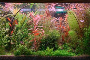 Ilustración de Cómo hacer un acuario de plantas