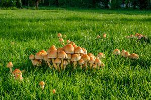 c mo eliminar los hongos de jard n