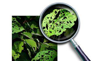 Ilustración de Cómo detectar y eliminar plagas comunes del jardín