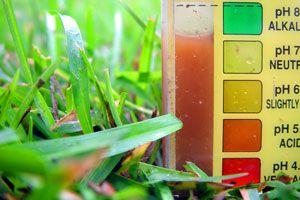 Cómo medir el pH del suelo