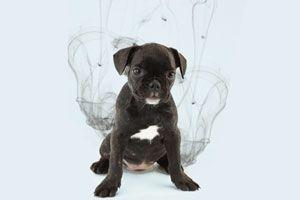 Cómo Quitar el Olor a Perro
