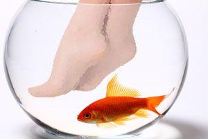 ¿Qué es la pedicura con peces?