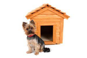 Cómo comprar una caseta para el perro
