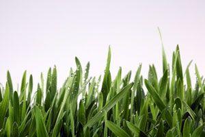 El césped requiere de ciertos pasos para ser sembrado