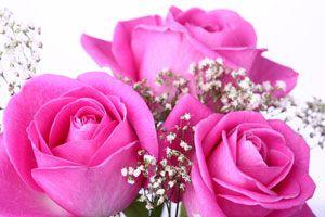 Cómo armar un ramo de rosas