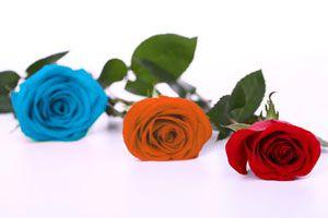 Cómo teñir rosas