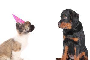 Cómo hacer que tu perro acepte a otro cachorro