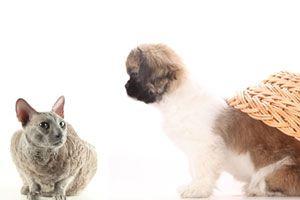 Cómo hacer que tu perro acepte a un gato