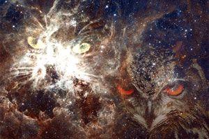 Meditación para conocer tu animal totémico