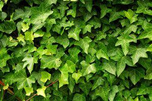 Plantas para combatir la humedad del hogar