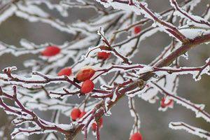 Cómo preparar el jardín para el invierno