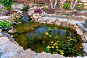 Cómo hacer un jardín de lluvia