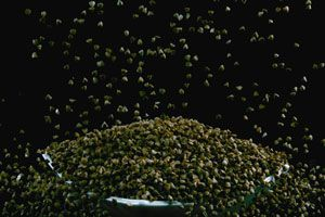 Propiedades de las semillas de chía. Consumo diario de chía. Aporte nutricional de las semillas de chía.