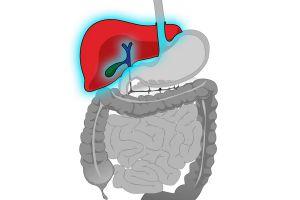 Ilustración de Cómo Limpiar el Hígado y la Vesícula