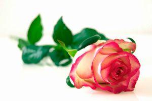 Cómo Teñir Flores Naturales Paso A Paso