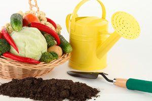 Cómo armar un kit de jardinería