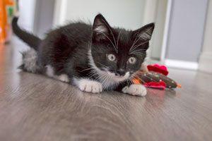 La Importancia de Jugar con el Gato