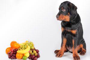 ¿Los perros pueden comer frutas?