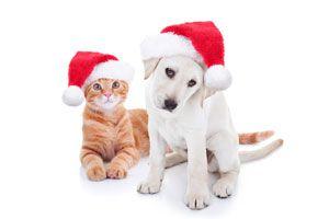 Cómo evitar accidentes con tu mascota en las fiestas