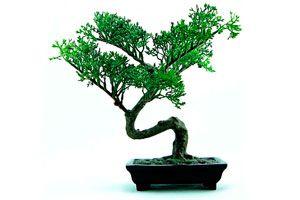 Rucos y consejos para hacer bonsáis. Como cuidar y mantener un bonsái. tips para la creación de bonsáis. Riego, cuidado y mantenimiento de un bonsai