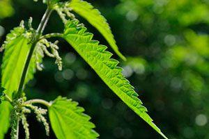 12 antiinflamatorios naturales
