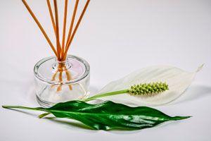 2 aromatizantes caseros y naturales. Recetas de aromatizantes caseros para el hogar. Cómo hacer aromatizantes de ambientes caseros.