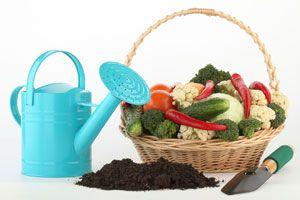 Recetas para preparar abono casero y natural. Cómo elaborar un fertilizante natural para nutrir las plantas. Preparación de fertilizantes caseros