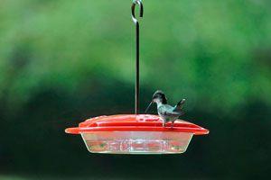 Pasos para hacer un alimentador para atraer a los colibríes. Cómo crear un comedero para aves en tu jardín