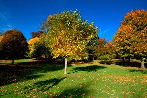 Tips para elegir los mejores árboles para el patio. Consejos para escoger los árboles del jardín. Guía para seleccionar los árboles para el jardín