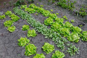 Guía para hacer una Huerta en Casa