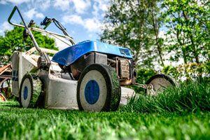 Pasos para cuidar el césped del jardín. Cuidado y mantenimiento el césped. Cómo regar, cortar y cuidar el césped del jardín