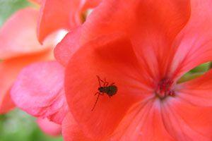 Cómo Eliminar los Insectos de las Plantas