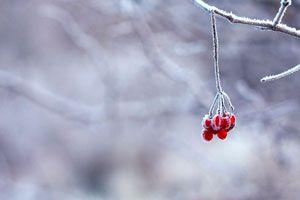 Cómo Cultivar en Invierno