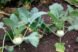 Cómo Cultivar en Verano