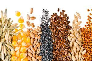 Cómo consumir semillas saludables. Los beneficios de las semillas saludables. 10 de las mejores semillas para consumir
