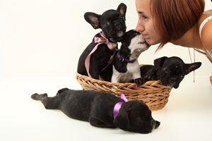 Cómo vivir con un perro si eres alérgico. tips para evitar la alergia si tienes perro en casa. Consejos para convivir con un perro siendo alérgico