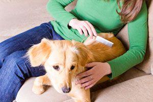 Pasos para evitar las pulgas y garrapatas. Guía para el control de plagas en tus mascotas. Cómo evitar las pulgas y garrapatas