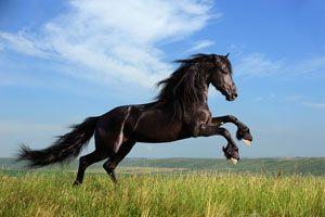 El significado de los sueños con caballos. Qué significa soñar cabalgando un caballo. Como interpretar los sueños con caballos