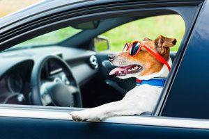 Cómo Viajar con Mascotas