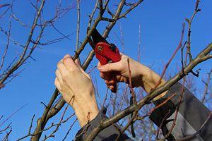 Guía para hacer esquejes de plantas y árboles. Cómo obtener un esqueje para reproducir plantas. Técnicas para cortar un esqueje