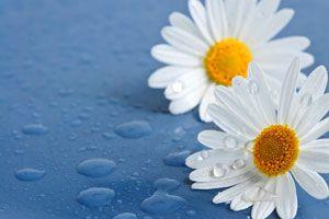 Creencias supersticiosas sobre las flores. Algunas de las supersticiones de las flores más conocidas. Supersticiones relacionadas con las flores