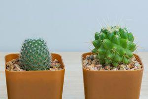 Ilustración de Cómo Pintar Piedras y Simular Cactus