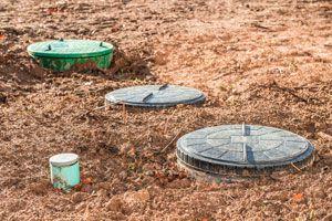 Una Bomba de Nutrientes para el Jardín
