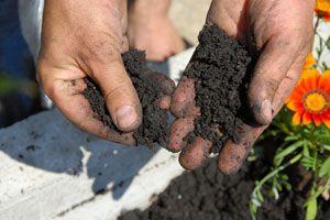 Cómo reconocer el pH del suelo. Cómo saber cuál es el pH del suelo. Métodos caseros para saber si el suelo es ácido o alcalino