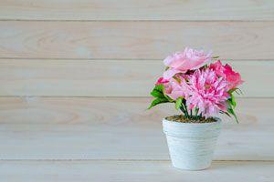 Ideas para preparar las plantas durante las vacaciones. Cómo cuidar de las plantas durante tus vacaciones. Cómo regar las plantas en vacaciones