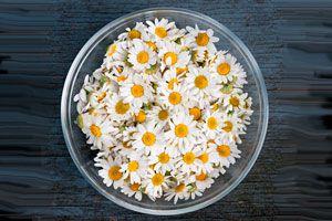 Beneficios de la terapia floral de california. Qué es la terapia de flores de california. Cómo usar las flores de california