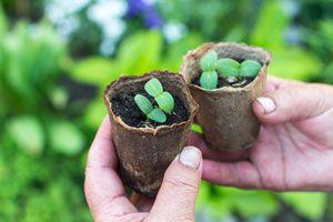 Cómo hacer Tiestos Biodegradables